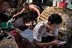 A justifiably concerned chicken in Mawlamyine (jessekirkwood) Tags: ifttt instagram myanmar burma mawlamyine market street chicken fujix xt2 xf23mm fujifilm fujifilmasia travel