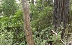 Lot 1 Reedy Creek Road, Bodalla NSW
