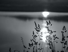 Setting sun through grasses - HMBT - Explore 16 June 2017 (Jo Evans1 - off and on for a while) Tags: briton ferry river neath sunset mono bokeh hmbt grasses sun reflected