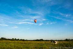 20170614033-2.jpg (marcel van Doesburg) Tags: luchtballon koeien bossche broek bosschebroek