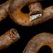 Rusted chain - newly broken (wrcarroll57) Tags: macromondays broken rust chain macro