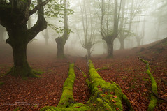Adentrate por favor (Pruden Barquin) Tags: paisaje landscape bosques forest niebla fog hayedos hayas ambiente tonos parquenatural gorbeia prudenbarquin fotografia nikon naturaleza nature