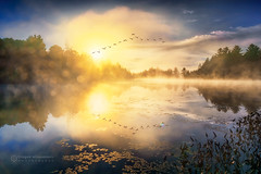 Magical sunrise over foggy river (Dragan Milovanovic photography) Tags: autumn trees canada sky sunrise fog morning lake birds water reflectionca geese sun light clouds fall goose flight landscapes mood quebec waterscape flying flock scenery foggy kingsbury sonyilca77m2 draganmilovanovicphotography sonyslta77ii easterntownships sunlight