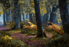 Le sous-bois! (pat.thom974) Tags: forest fog trees leaves wood yellow