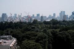 DSCF6290 (keita matsubara) Tags: shinjyuku gyohen shinjyukugyoen tokyo japan garden 新宿 新宿御苑 東京 庭 庭園 日本