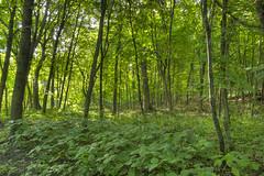 16 (16) (Ryan Gottsleben) Tags: ninemilecreek woods nature ryan gottsleben stream morning peaceful landscape trees green