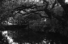 Phocus P30 pyrocat_0017 (Man with Red Eyes) Tags: meta35 rural ferrania p30 p30alpha filmtest pyrocathd 11100 15mins semistand presoak 70f v850 f6 nikonf6 50mmf12 nikkor analog blackwhite silverhalide 35mm film filmisnotdead filmtilidie bnw bw homedeveloped pond bridge reflection