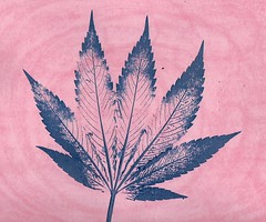 cloud xbox patriot cannabis leaf art istanbul thc osprey kennedy azure bullion flowers flour clean water air warming petunia madonna artist popart leaves hemp pot fumar platform wave pluto quadrillion gorilla elephant mountain bueno pain medical dispensary recreational photo prom night music explore camping current new street faded images stockpot microsoft apple watch design leafly high cbd marley holiday fishing rainbow karma liquid amazing ocean hound view streamimg internet concert express ilovepink