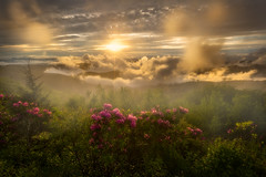 The Dreamland - 2628 (J & W Photography) Tags: 2017 appalachia blueridgeparkway catawbarhododendron craggygarden jwphotography june northcarolina tennesse blossom clouds flameazaleas flower fog grass landscape nature plantappalachiamountains rhogodendron sunset tree