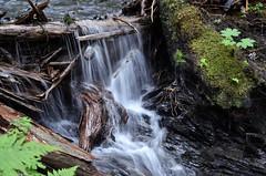 Derby Cove Falls #2 (steve_scordino) Tags: seward derbycove waterfall longexposure water softwater
