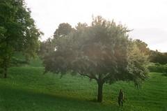 star roving (szmenazsófi) Tags: smenasymbol lomosmena smena analog analogue film 35mm lomo fujicolor tree nature green landscape greenery analóg hungary budapest gellérthegy gellérthill