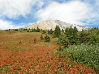 Highwood Pass Alpines .....
