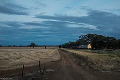 Wheat train past the cut wheat (philcmartin1503) Tags: sunset blue australia nsw trains