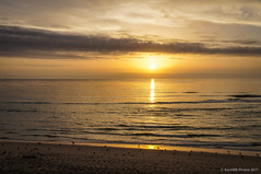 Plácido atardecer (SantiMB.Photos) Tags: 2blog 2tumblr 2ig atardecer dusk playa beach sunset gaviotas seagulls océano ocean atlántico atlantic vagueira vagos aveiro praiadavagueira portugal prt