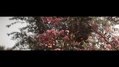 Sunlight (HaydenKlein) Tags: blackmagic pocket cinema cinematography cinemascope cinematic cine rokinon 35mm anamorphic nature flower
