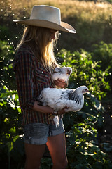 Ladies (The Noisy Plume) Tags: hen chickens garden cowboyhat summer grow cultivate farm ranch