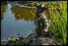 Le chien (o.penet) Tags: stone benches publicgardens bancs pierre honfleur normandy fleurs flowers blue red pink yellow mauve