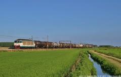 E633 111 (MattiaDeambrogio) Tags: treno treni train trains e633 111 vespolate mercitalia