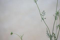 (Mattron) Tags: plant closeup green nature park delicate