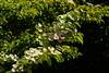 _DSC5148 (wdeck) Tags: garten garden botanicalgarden landhausettenbühl bamboo bambus sonyalphaslt77 sony 18