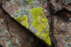 20170714-DSC00016.jpg (adam.paiva) Tags: lichenswelike denver lichens co deercreekcanyon