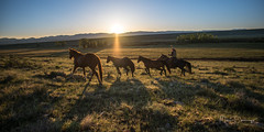 Rancher's Sunrise (mikedemmingsphoto.com) Tags: western horses ranches cowboys cowgirls colorado sunrise romance outdoors outside landscape rancher work