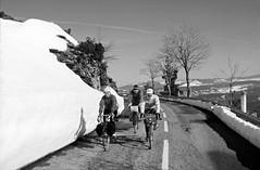 Ballade hivernale (maxguitare1) Tags: neige nieve neve snow cyclotourisme cycling ciclismo velo bici bike bicicleta bicyclette randonneur mochilero backpacker montagne mountain montagna montaña personnes gente gens people noiretblanc blackandwhite monochrome