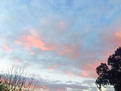 Canberra ☁️  ☁️ & 🌳 🌲 (Rantz) Tags: rantz mobilography 365 roger doesanyonereadtagsanymore mobiligraphypad2016 psad2016 canberra australiancapitalterritory clouds cloud sky