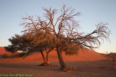 Sossusvlei Near Dune 45-5903 (dennis.zaebst) Tags: africa namibia sossusvlie dune45 desert