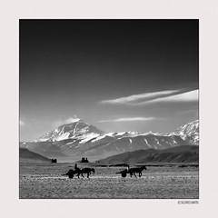 Residence of the Gods 001 (siggi.martin) Tags: asien asia china tibet westtibet westerntibet tingriebene tingriplain berg mountain berge mountains mteverest pferdewagen horsecart wolke cloud wolkenclouds