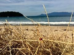 Joaninha (lua_baroni) Tags: sol dia praia mar flor linda joaninha