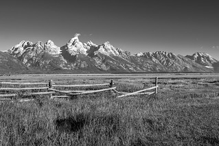 Viewing the Teton range from a field at Mormon's Row