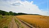 Dirt Road near Roštín (DTB_2996) (masinka) Tags: dirt road polňačka cesta field pole czechrepublic czech czechia morava moravia travel photography outdoors europe evropa