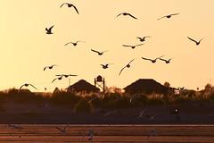 Somewhere (luenreta) Tags: landscape 7dwf saturday gaviotas sunset