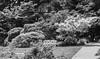 Spring-2 (FSR Photography) Tags: bielefeld bw blackandwhite blackwhite sw schwarzweis schwarzweiss canon canondslr canon400d nature natur light leaves blätter monochrome monochrom botanik bienenhaus fsr fsrphotography
