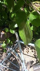 20170604_103447 (AR Cycles) Tags: ar cycles custom randonneur classic tubing stainless lugs nitto front rack velo orange 700c compass steel fillet chrome stem