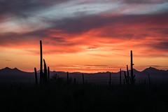 Arizona Sunset (Morten Kirk) Tags: mortenkirk morten kirk saguaro national park tucson arizona usa 2017 roadtrip holiday desert cactus