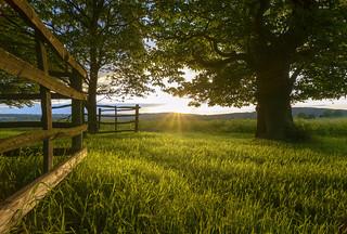 Tyburn Wood Sunset