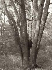 myles standish trail (by Aaron D. McCormick) Tags: ri rhodeisland hiking hikingtrails walking walkingtrails nature naturetrails survival camping outdoors greatoutdoors adventure trailblazing walk trek tramp trudge slog footslog march ramble rove traipse hoofit legit mothernature environment wildlife flora fauna countryside wilds backcountry boondocks boonies outdoorrecreation ecotourism bw blackandwhite blackwhite