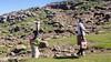 Hauling water (Hans van der Boom) Tags: holiday vacation southafrica lesotho zuidafrika semonkong maseru maletsunyane river people women work water lso