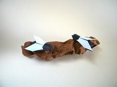 Mosca (Fly) - Ángel Ecija (Rui.Roda) Tags: origami papiroflexia papierfalten mouche mosca fly ángel ecija