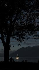 Entrer dans la lumière... (Fred&rique) Tags: lumixfz1000 photoshop hdr raw lac léman lausanne parc voilier suisse arbre