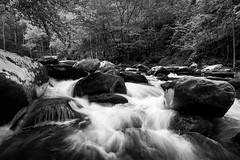 Rushing through the Smokies (John Cothron) Tags: americansouth blountcounty cpl canoneos5dmkiv cothronphotography distagon2128ze distagont2821ze dixie eastsouthcentralstates greatsmokymountainnationalpark johncothron middlepronglittleriver silverefexpro2 southernregion tennessee thesouth townsend tremont us usa unitedstatesofamerica volunteerstate zeissdistagont2821ze bw blackandwhite circularpolarizingfilter clouds cloudyweather creek flowing forest freshwater landscape monochrome morninglight nature outdoor outside river rock scenic spring stream water img17514170519bw ©johncothron2017 rushingthroughthesmokies
