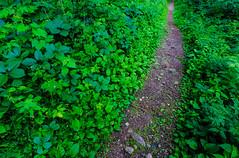 Hiking at Sibley State Park (Tony Webster) Tags: minnesota mttom mttomtrail newlondon sibleystatepark dirt green hiking hikingtrail trail unitedstates us wmc1830