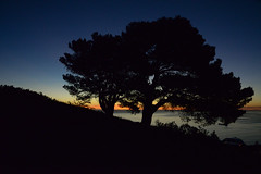 Sunset Silhouette (Russell Discombe) Tags: silhouette sunset silhouettesunset tree southafrica capetown westerncape signalhill sigma sigma24105 nikon nikond610 lowlight yellow blue