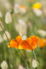 NAW-7836 (Nawred85) Tags: fleurs localisation nature printemps saison