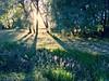 Longest Palouse Sunset of the Year. Summer is here! (Ryan McGinty) Tags: idaho latahcounty goodtimes newfriends epiclight landscape ryanmcginty