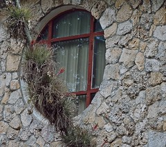 By The Window (ACEZandEIGHTZ) Tags: window round tillandsias palm growingon nikon d3200 airplants coral coralrock wall limestone