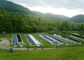 Opportunity to invest now in Aquaculture in Romania