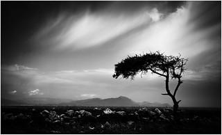 Late evening Lone Tree
